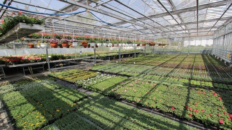 Pflanzen in 1A Premium-Qualtität