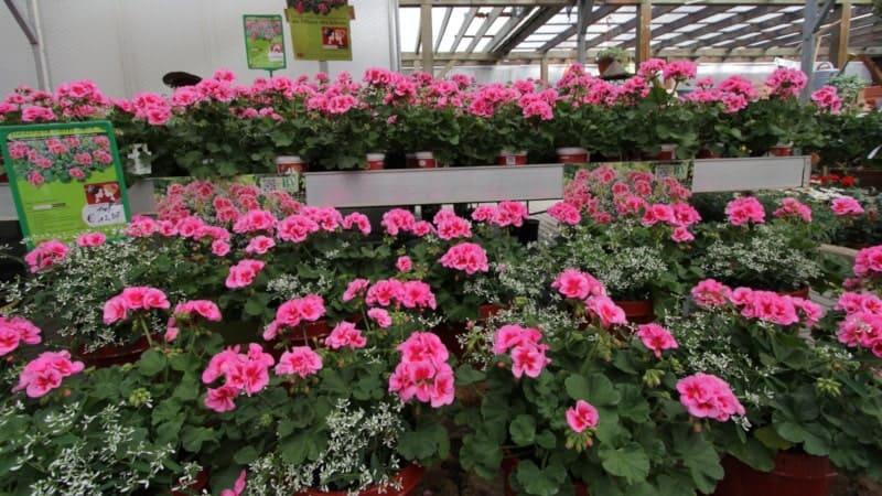 Blumen aus unserer Produktion