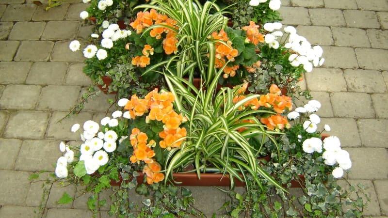 Blumenkästen zum Ausleihen