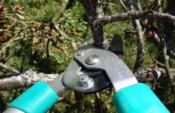 Ein fachmännischer Baumschnitt für einen gesunden Baum